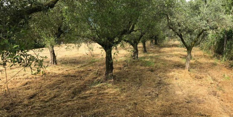 rudere-con-terreno-ferentino-cartiera-frosinone-29000-euro-lepinia-immobiliare-supino-43