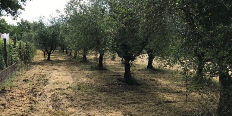 rudere-con-terreno-ferentino-cartiera-frosinone-29000-euro-lepinia-immobiliare-supino-46