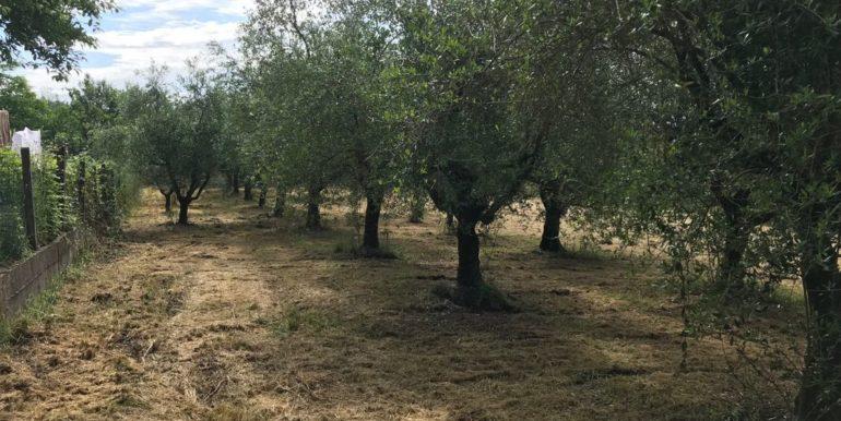 rudere-con-terreno-ferentino-cartiera-frosinone-29000-euro-lepinia-immobiliare-supino-47