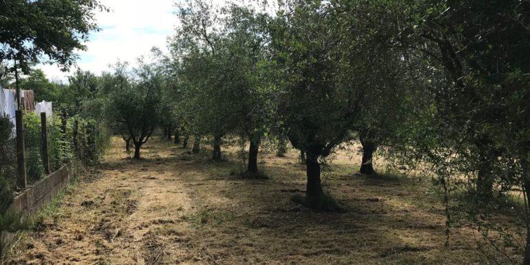 rudere-con-terreno-ferentino-cartiera-frosinone-29000-euro-lepinia-immobiliare-supino-48