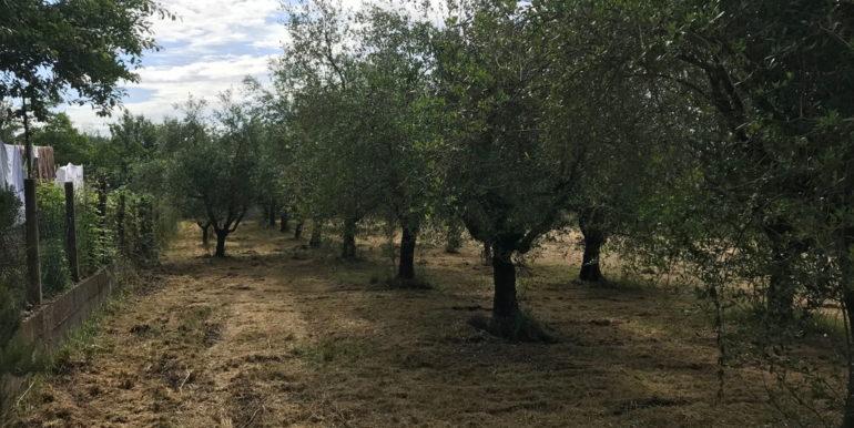 rudere-con-terreno-ferentino-cartiera-frosinone-29000-euro-lepinia-immobiliare-supino-49