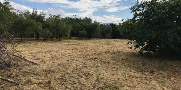 rudere-con-terreno-ferentino-cartiera-frosinone-29000-euro-lepinia-immobiliare-supino-52