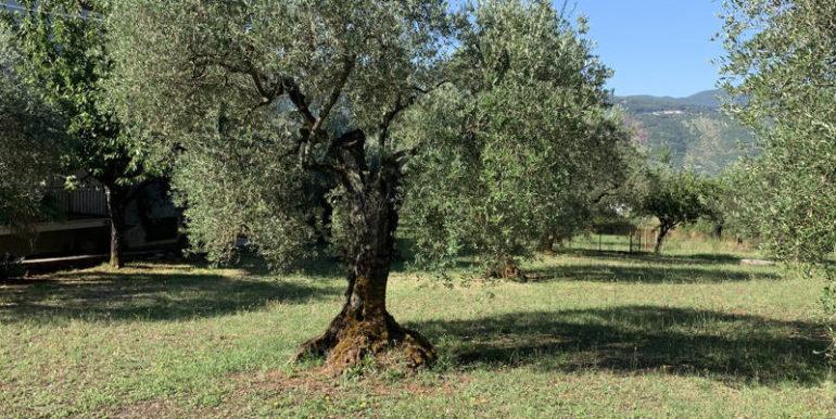 nuda-proprieta-vendesi-in-amaseno-frosinone-lepinia-immobiliare-supino-16