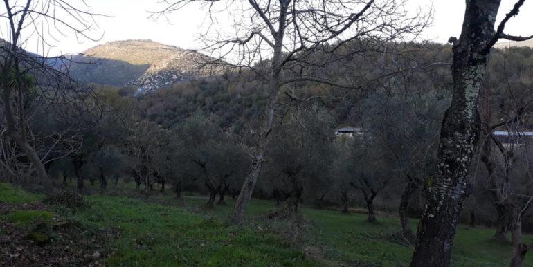 casale-con-terreno-vendesi-prossedi-latina-lepinia-immobiliare-supino-frosinone-87-copia